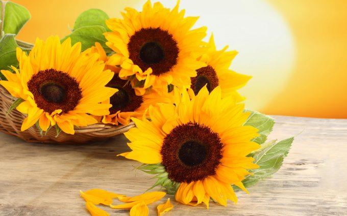 Free Download Cute Flowers Wallpapers Wallpaper Sunflower Hd Desktop Wallpapers 4k Hd