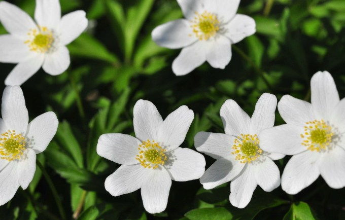 Indian white flowers images with names siewalls names of white flowers 29 cool wallpaper hdflowerwallpaper com mightylinksfo