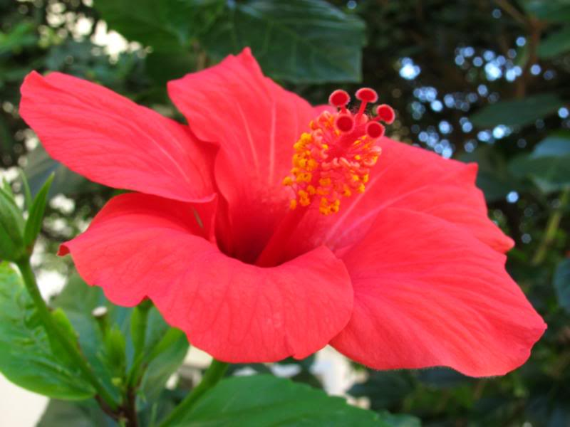 Www 3d Flower Wallpaper Com Red Flowers Pictures And Names 1 Widescreen Wallpaper