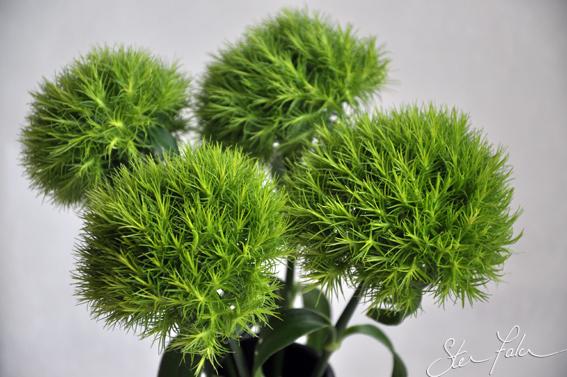 Www 3d Flower Wallpaper Com Green Flowers Names 2 Widescreen Wallpaper