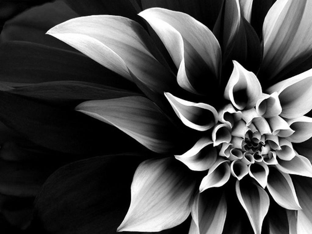 White With Black Flowers Wallpaper Walljdi