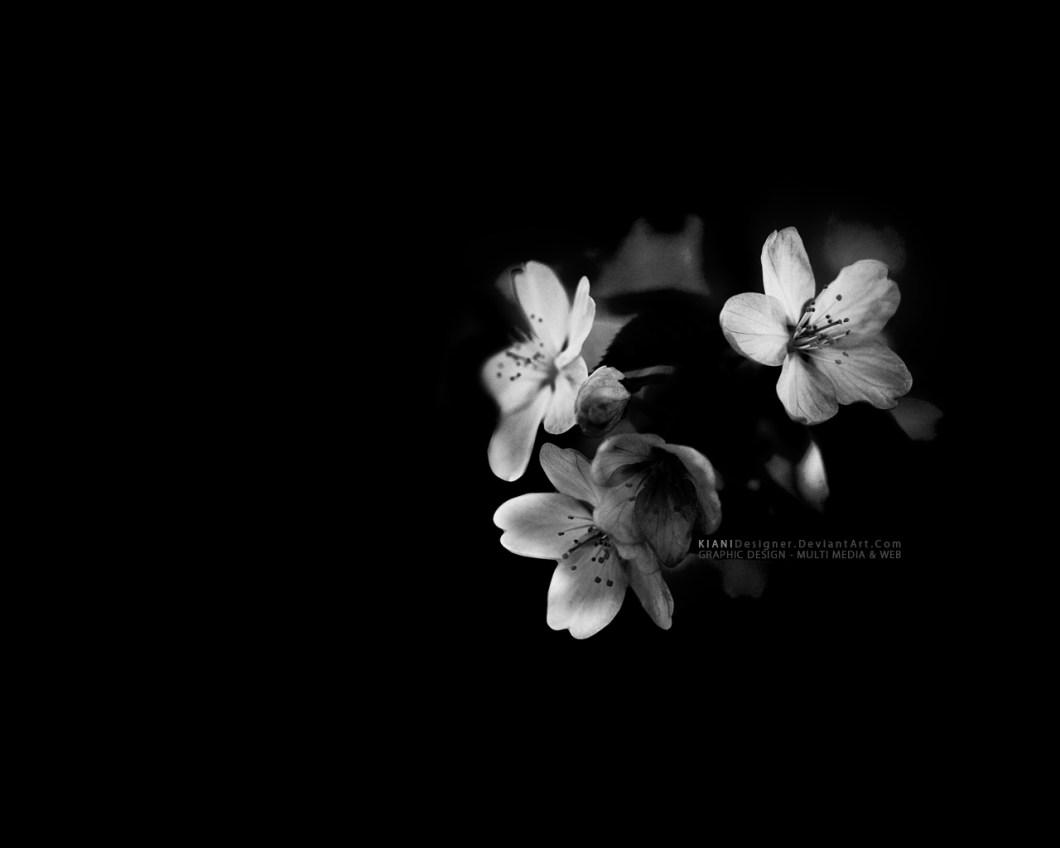 White with black flowers wallpaper walljdi black and white flowers wallpaper 16 wide mightylinksfo