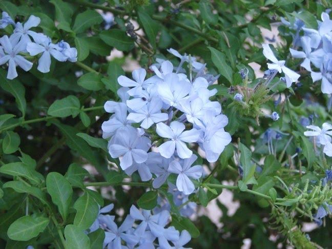 Www 3d Flower Wallpaper Com Blue Flowers On Bush 5 Widescreen Wallpaper