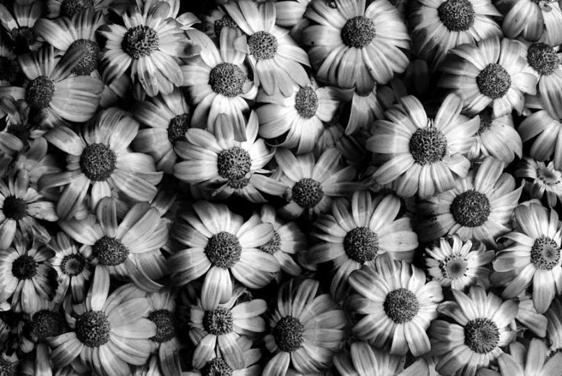 black and white wallpaper hd flower djiwallpaper co