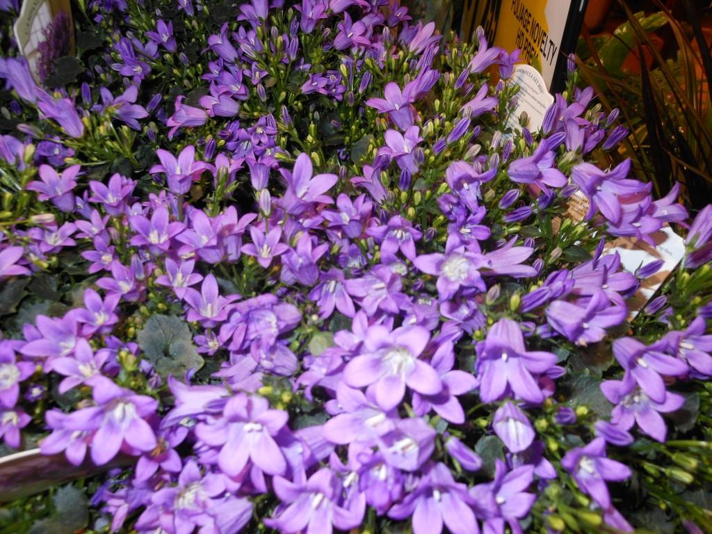 Www 3d Flower Wallpaper Com Purple Flowers Quotes 1 Background Hdflowerwallpaper Com
