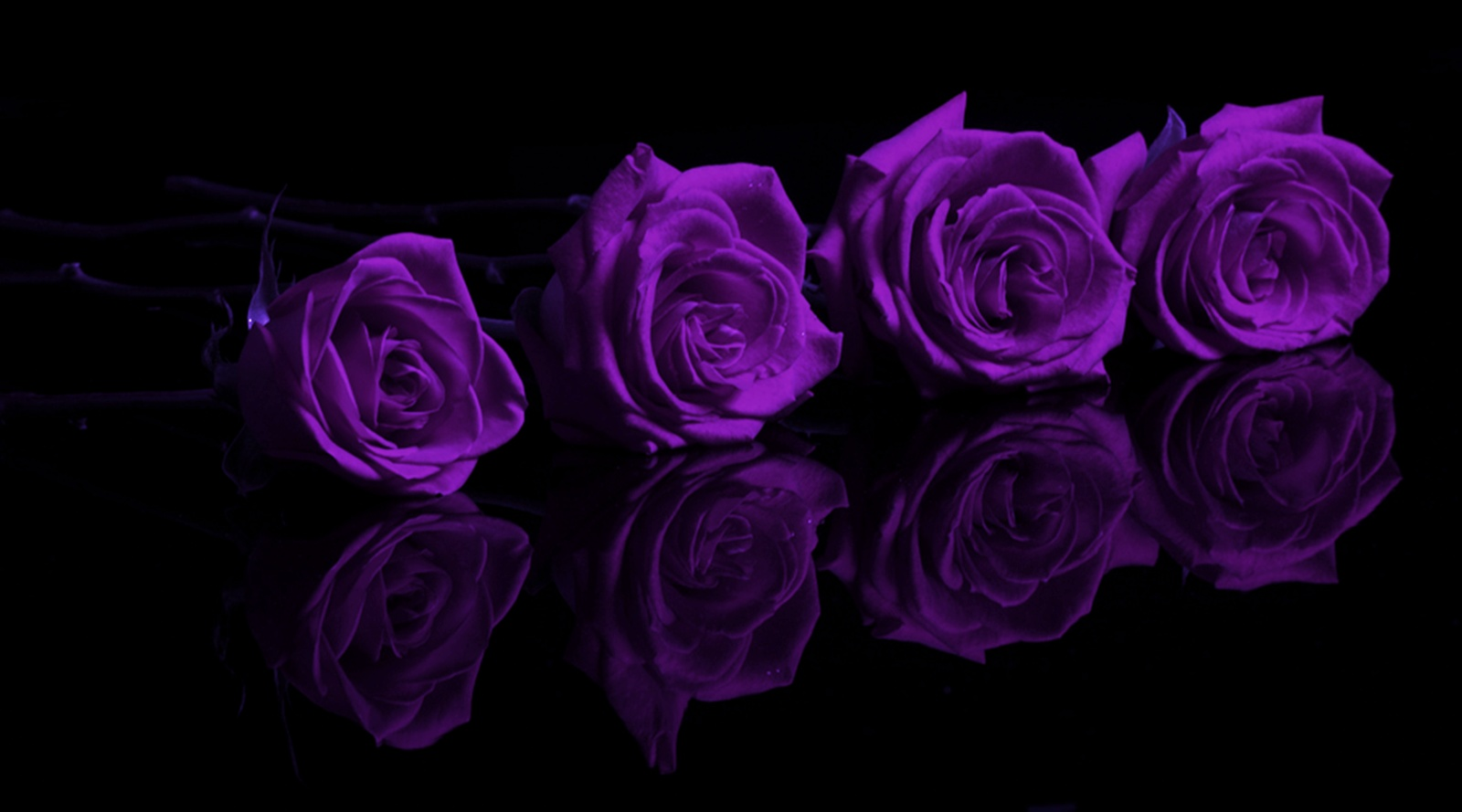 Purple Rose Wallpaper Desktop 12 Widescreen Wallpaper