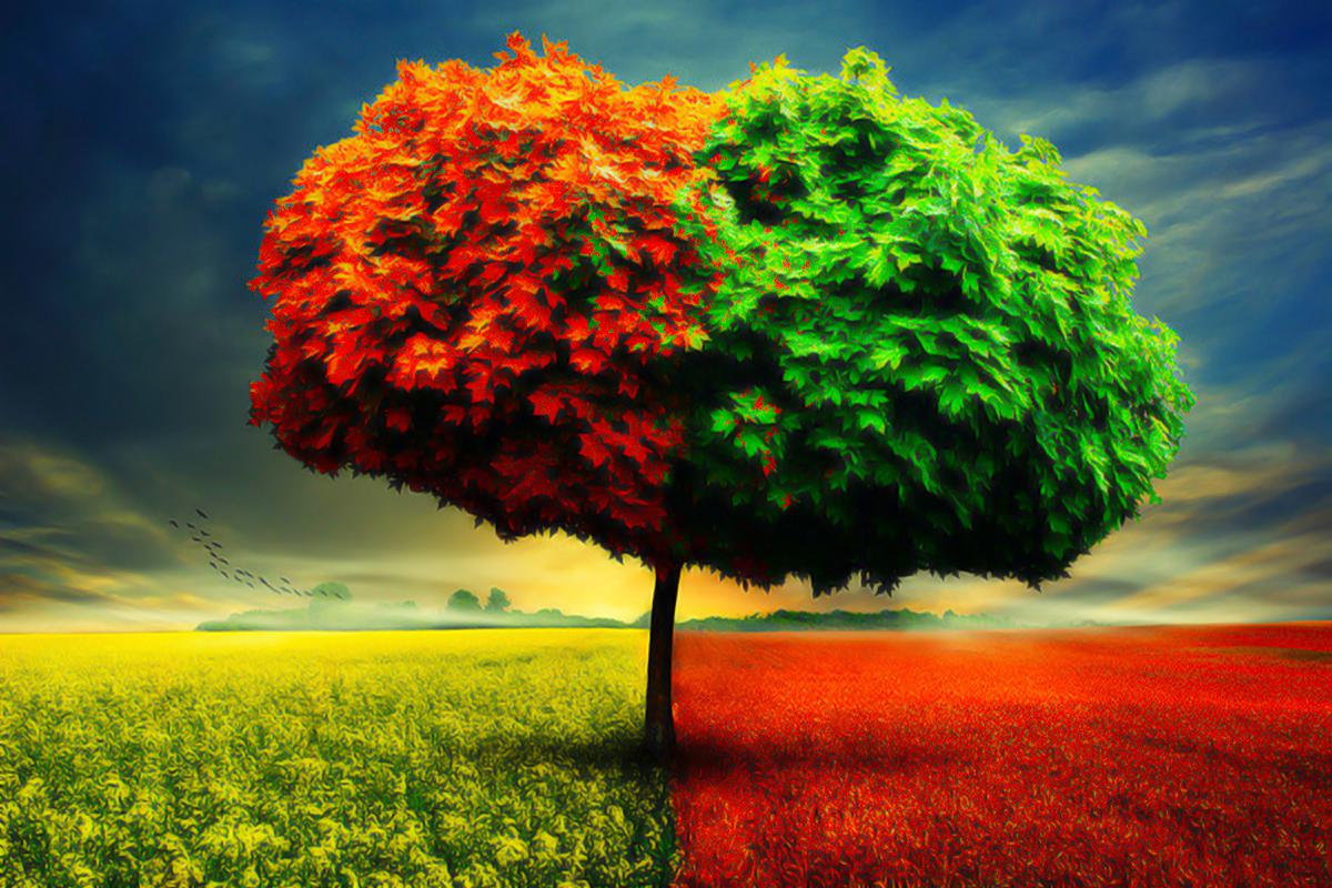 Besttreehdfreewallpaperspringseasontree  Hd Wallpaper