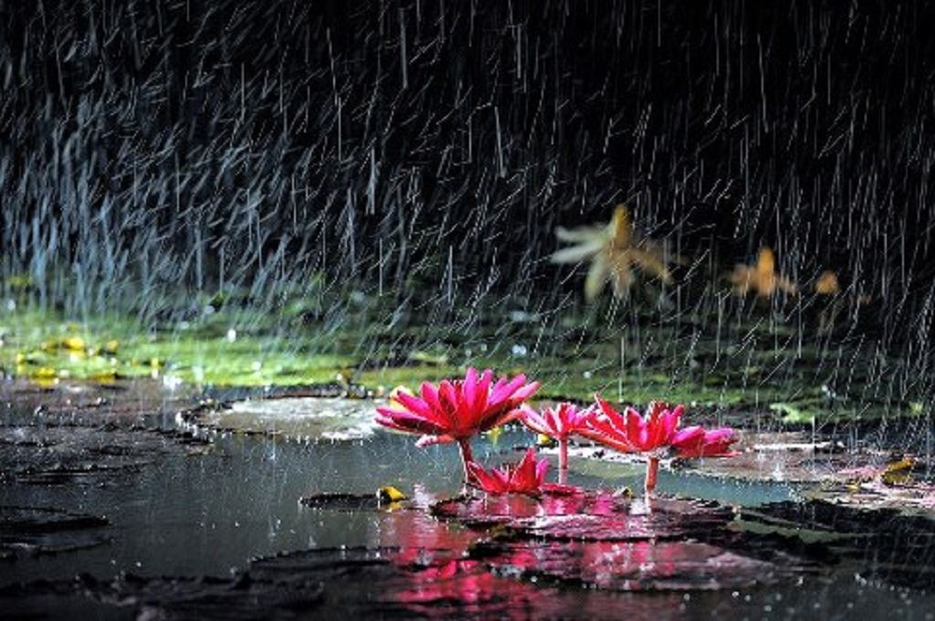 Rainy Season Wallpapers With Quotes Hd Floweer In Rain Enjoy Wallpapers Hd Wallpaper