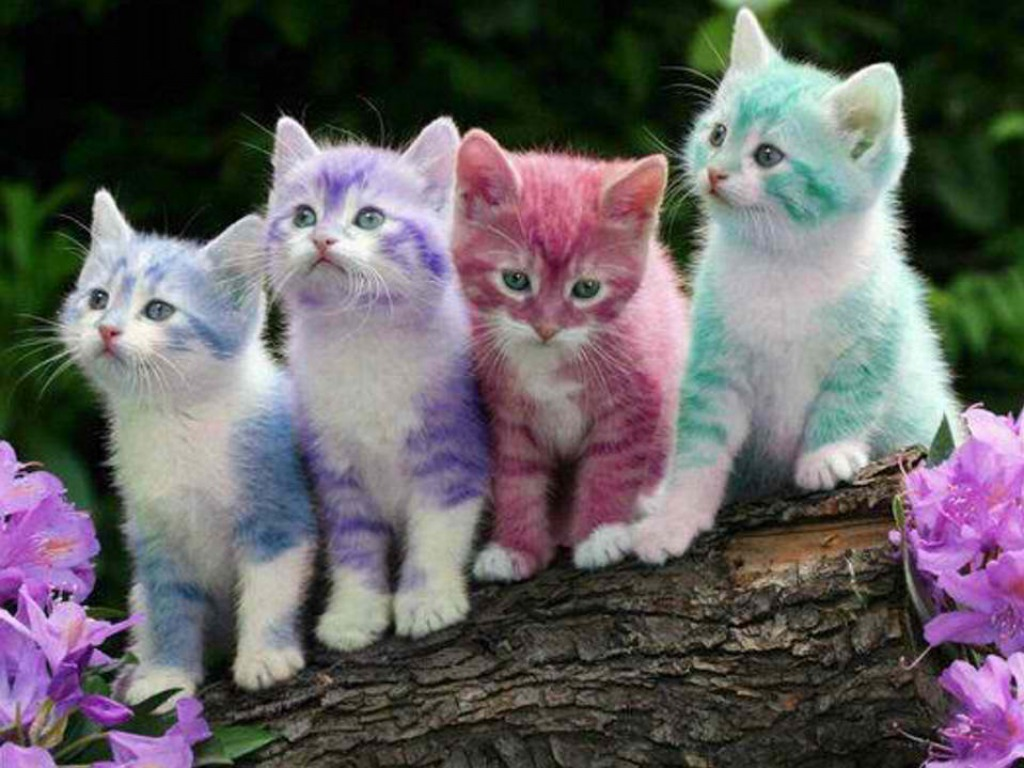 Cute Billi Wallpaper Rainbow Cats Hd Wallpaper