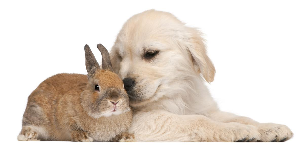 Cute White Baby Rabbits Wallpapers Dog And Rabbit Hd Free Wallappers For Desktop Free Hd