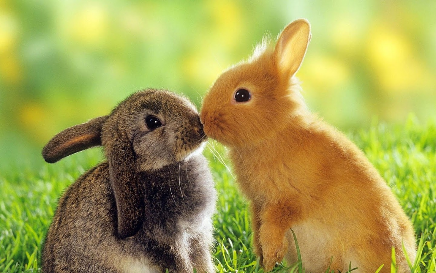 Cute Rabbits Wallpapers For Mobile Lovers Rabbits Hd Free Wallappers Ofr Desktop Hd Wallpaper