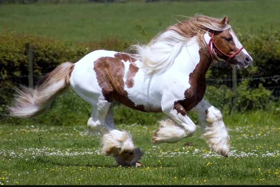 Cute Lovely Wallpaper For Mobile Running Horses Hd Wallpaper Free Download