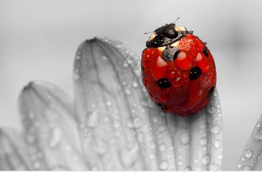 Cute Cat Wallpapers High Resolution Ladybug Wallpaper Free High Definition Download