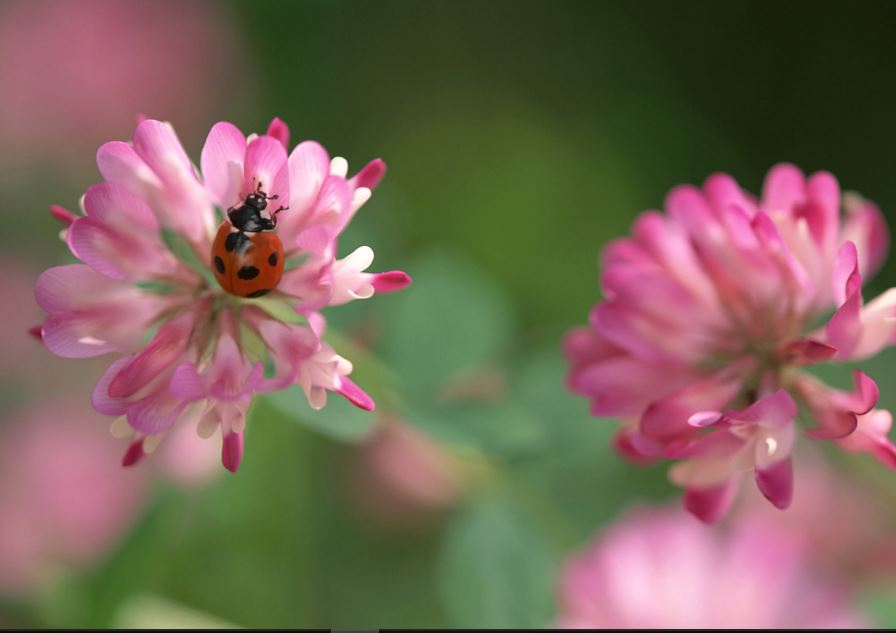 P Name Cute Wallpaper Ladybug Wallpaper Free High Definition Download