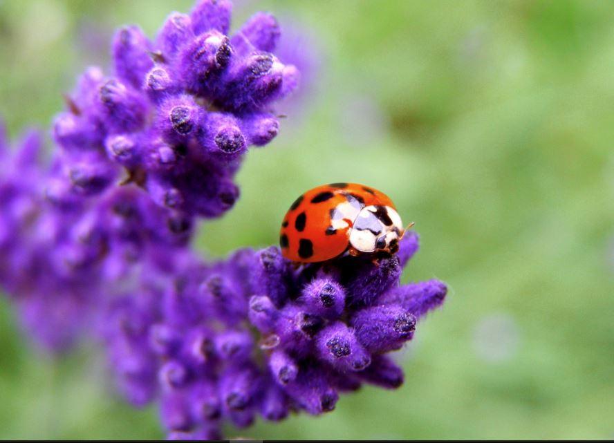 Mehndi Hd Wallpaper 1080p Ladybug Wallpaper Free High Definition Download