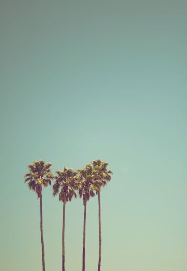 3 palm trees same size mobile size background