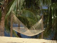 hammock palm trees sand grid 1920x1080
