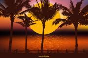 HD palm tree Wallpapers | palm wallpapers for background | iphone background