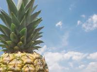 pineapple wallpapers for adove background changing