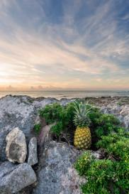 pineapple wallpapers hd beautiful for mobile