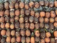 pineapple wallpapers with different color