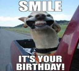 smile its your birthday donkey wishing you