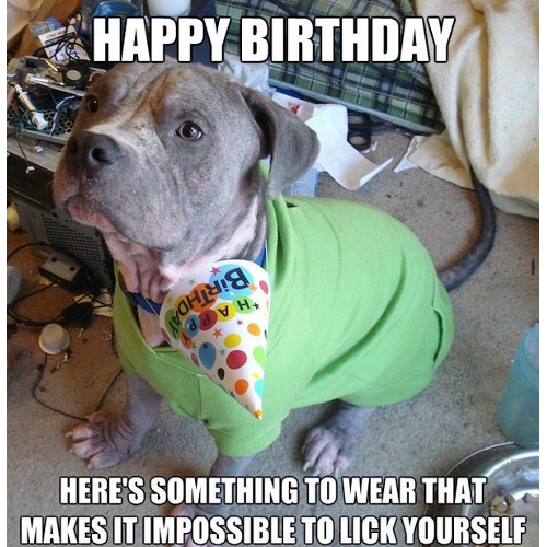 yellow-octopus-happy-birthday-dog-meme-16