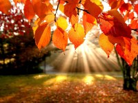 sun lights on leaves red mobile iphone wallpapers