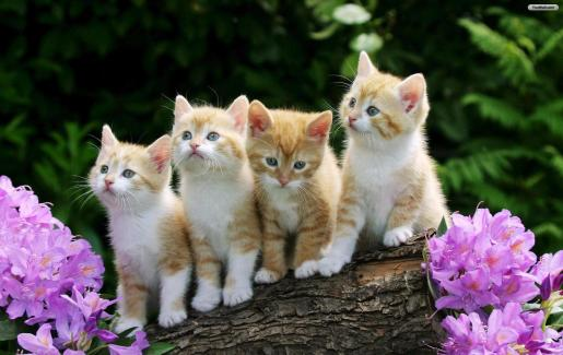 white and brown cats mobile iPhone wallpapers