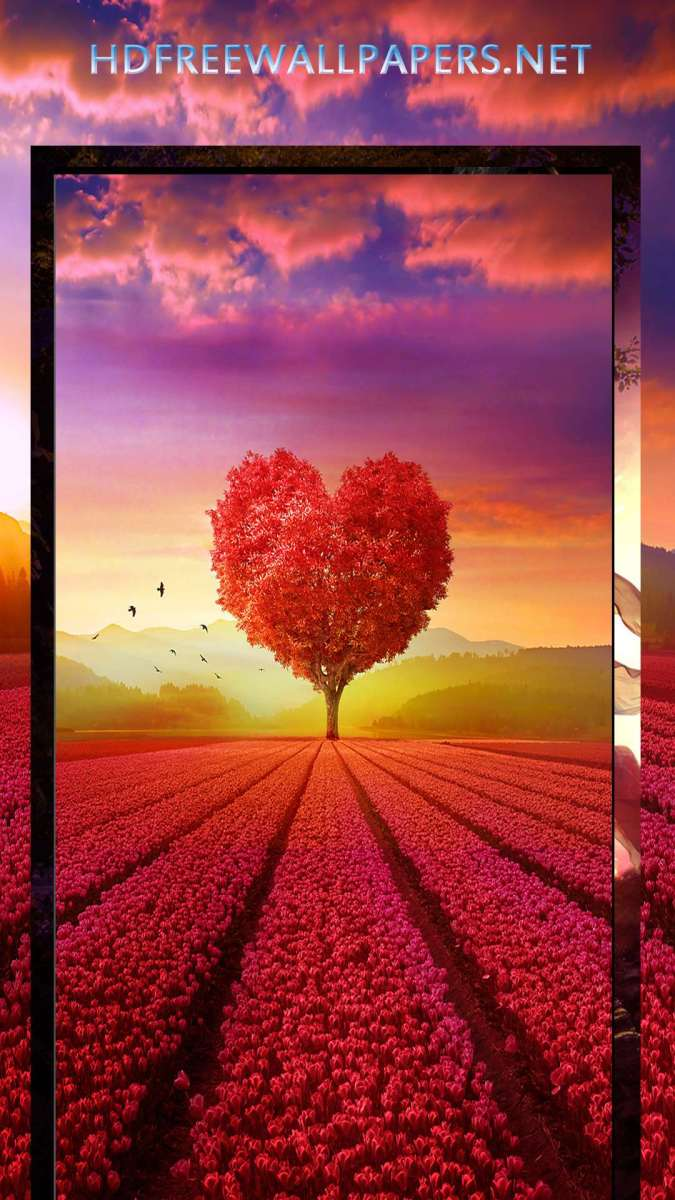 HD wallpapers for mobile phones