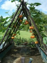 32 Successful Ways To Building DIY Trellis For Veggies And Fruits HomeDesignInspired 16