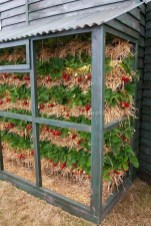 32 Successful Ways To Building DIY Trellis For Veggies And Fruits HomeDesignInspired 31