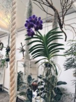 54 Of The Best Smelling Houseplants 15