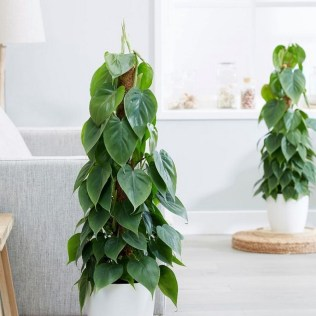 54 Of The Best Smelling Houseplants 3