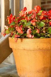 54 Of The Best Smelling Houseplants 7
