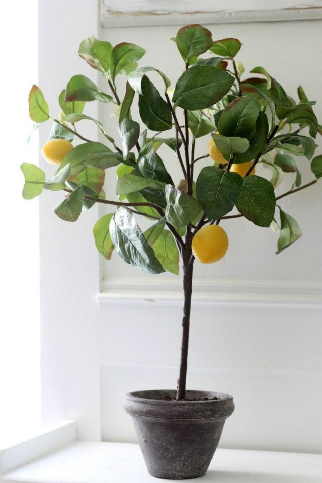 10+ Indoor Plant Care Tips Home Decor 8