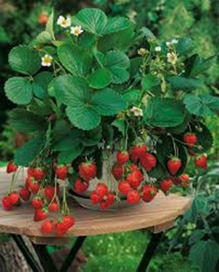12+ Container Gardening Ideas For Pots And Planting Herbs Home Decor 11