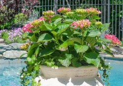 12+ Container Gardening Ideas For Pots And Planting Herbs Home Decor 2