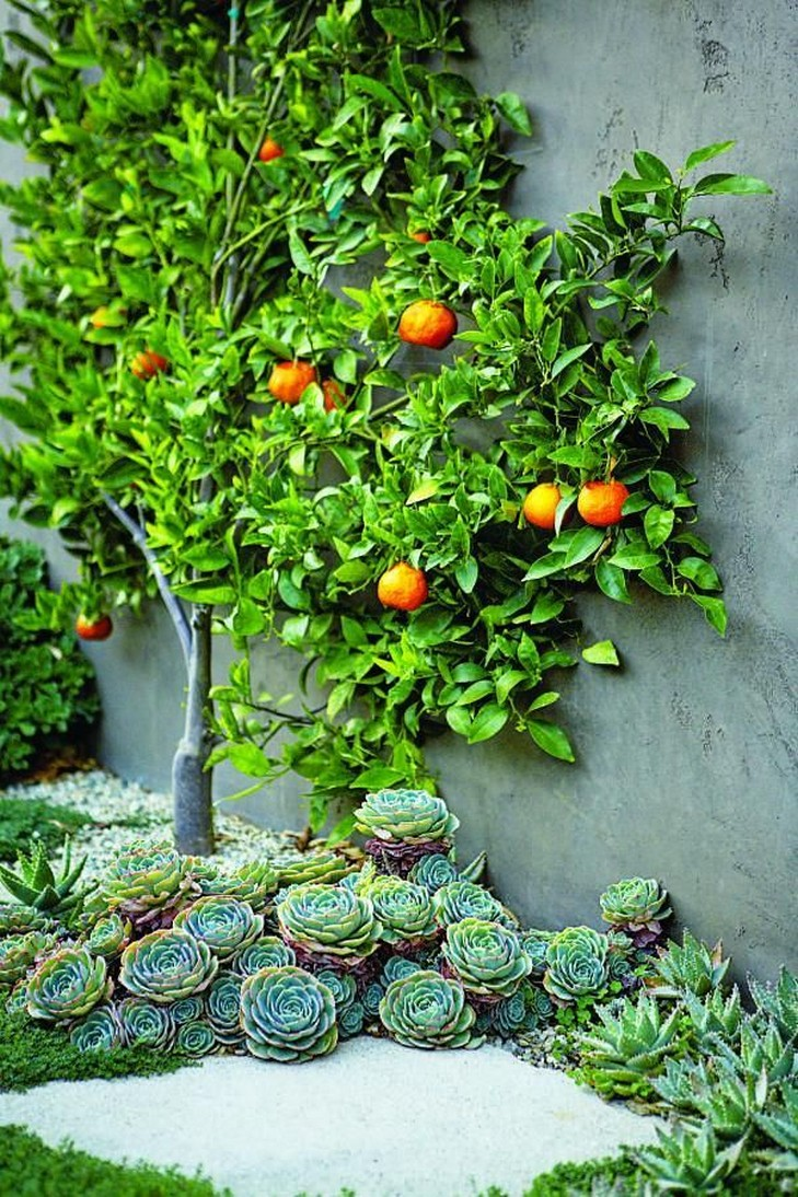 12+ Container Gardening Ideas For Pots And Planting Herbs Home Decor 3