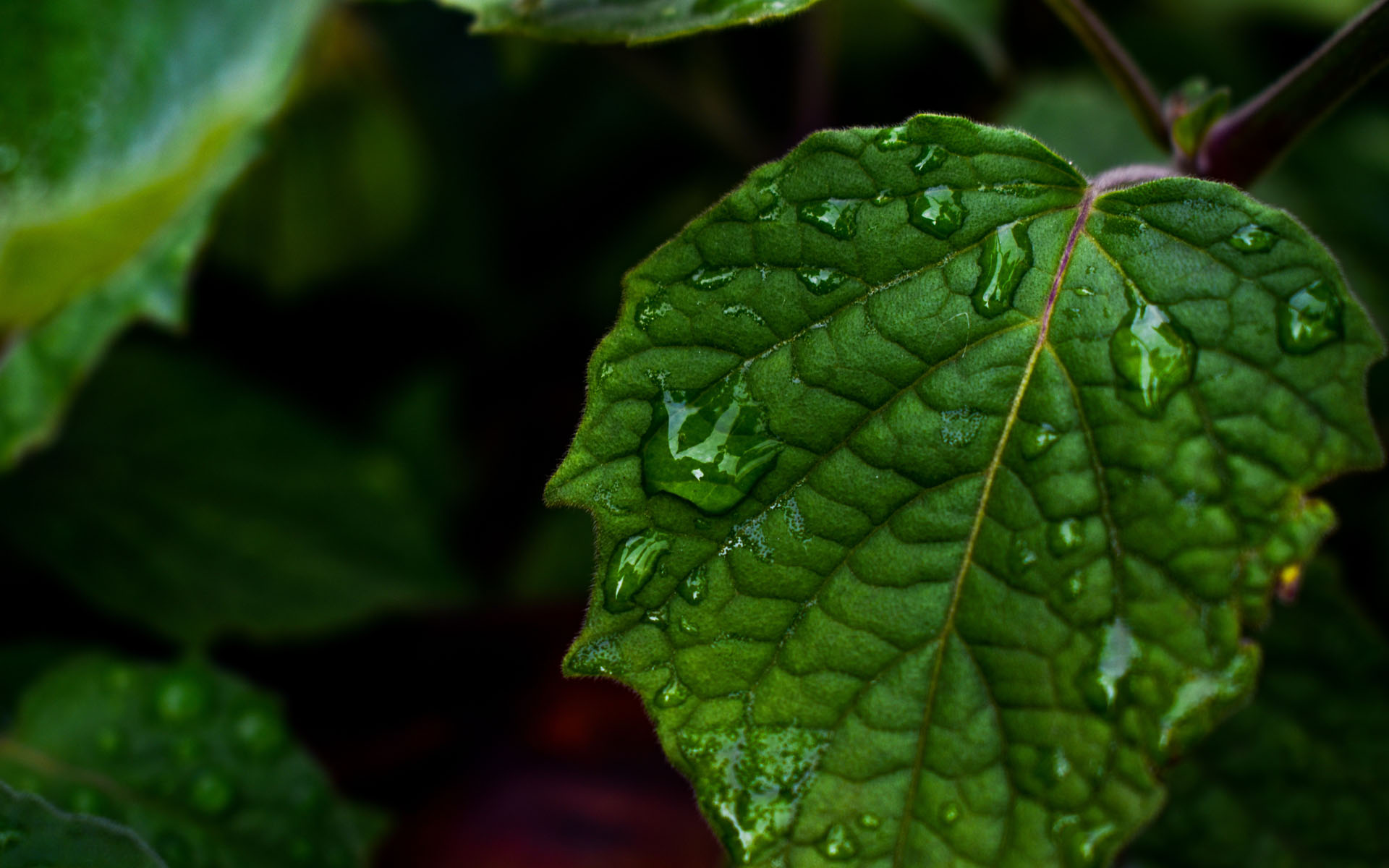 Live Wallpaper On Home Screen For Iphone X Drops Of Water On Leaf Hd Wallpaper Hd Latest Wallpapers