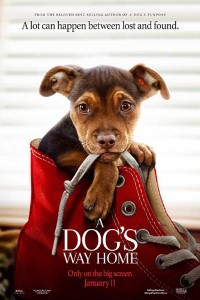 A Dog's Way Home (2019) Download English 720p 1080p