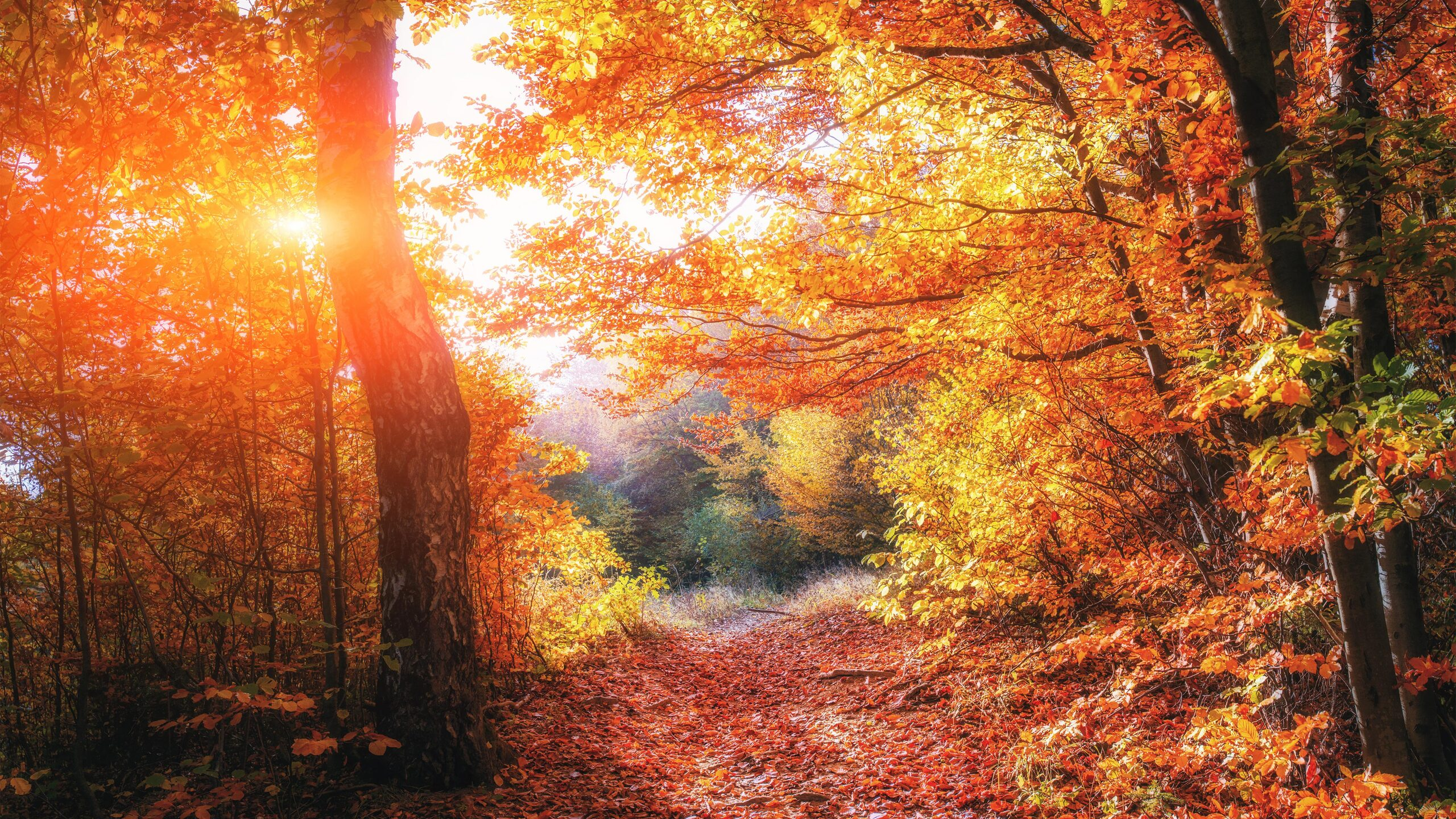 1440x2560 Uhd Wallpaper Fall 2560x1440 Autumn Forests Leaves Fall 5k 1440p Resolution