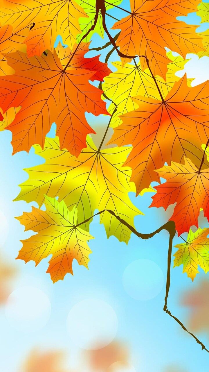 Fall Pumpkin Wallpaper Hd 720x1280 Autumn Leaves Hd Moto G X Xperia Z1 Z3 Compact
