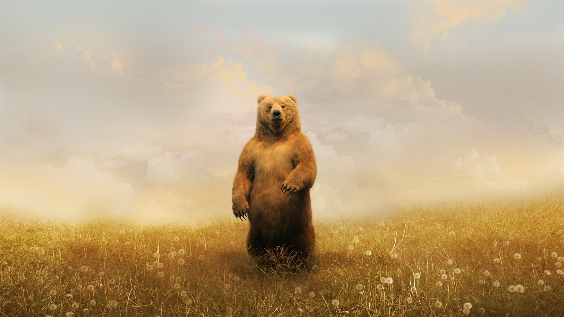 Cute Cockatiel Wallpaper Bear In Field Hd Animals 4k Wallpapers Images