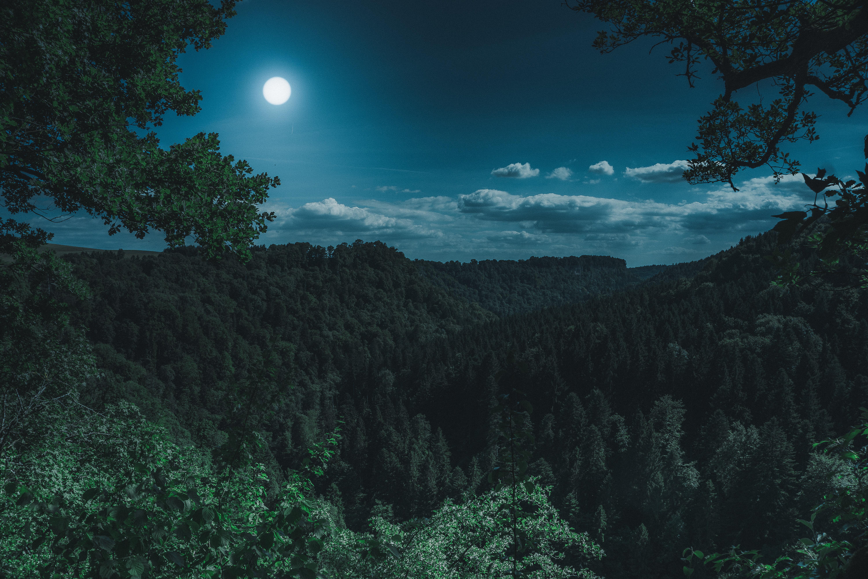 dark night forest view