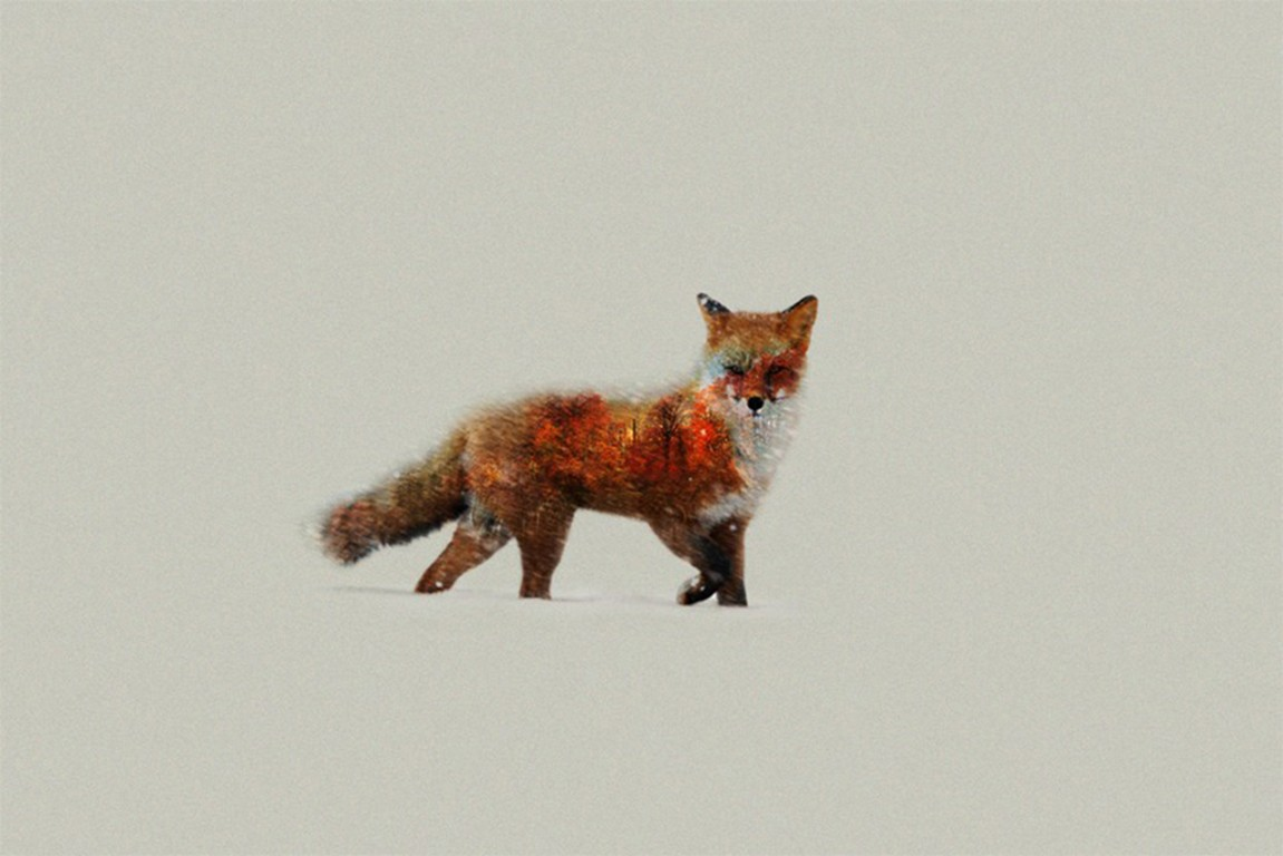 Cute Fox Drawing Wallpaper Fox Artist Hd Animals 4k Wallpapers Images Backgrounds