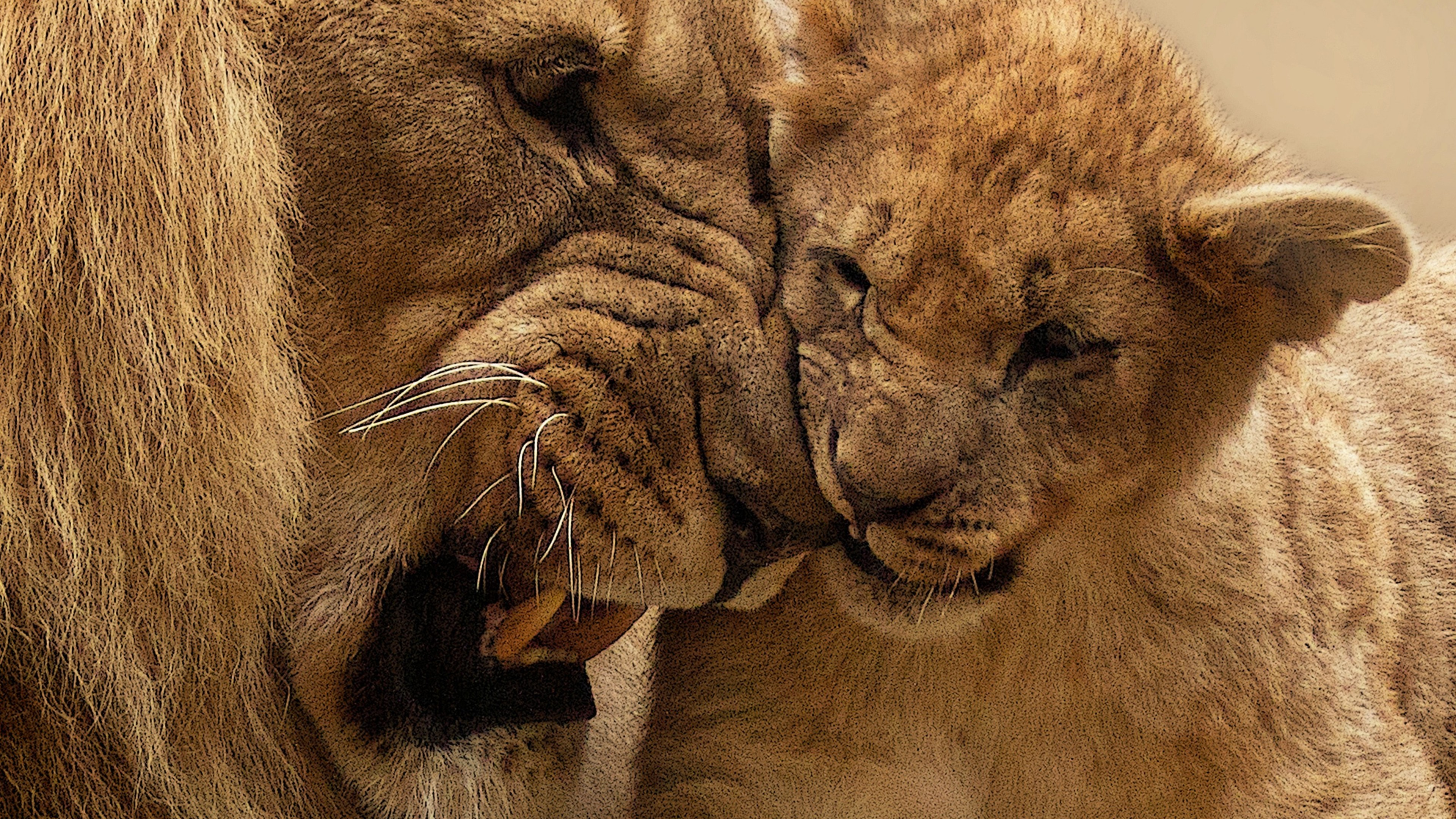 Funny Cute Cats Wallpapers Lion Mother Cub Hd Animals 4k Wallpapers Images
