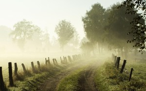 Misty morning, Lower Saxony, Germany