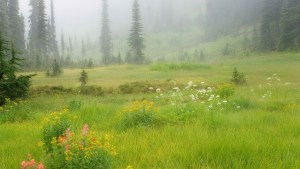 meadows-in-the-sky-revelstoke-national-park-british-columbia-canada
