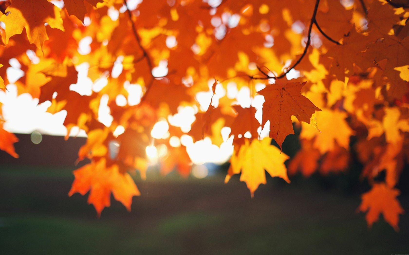 Autumn Fall Wallpaper 1600x900 Leaves Sunlight Depth Of Field Photography Bokeh Fall